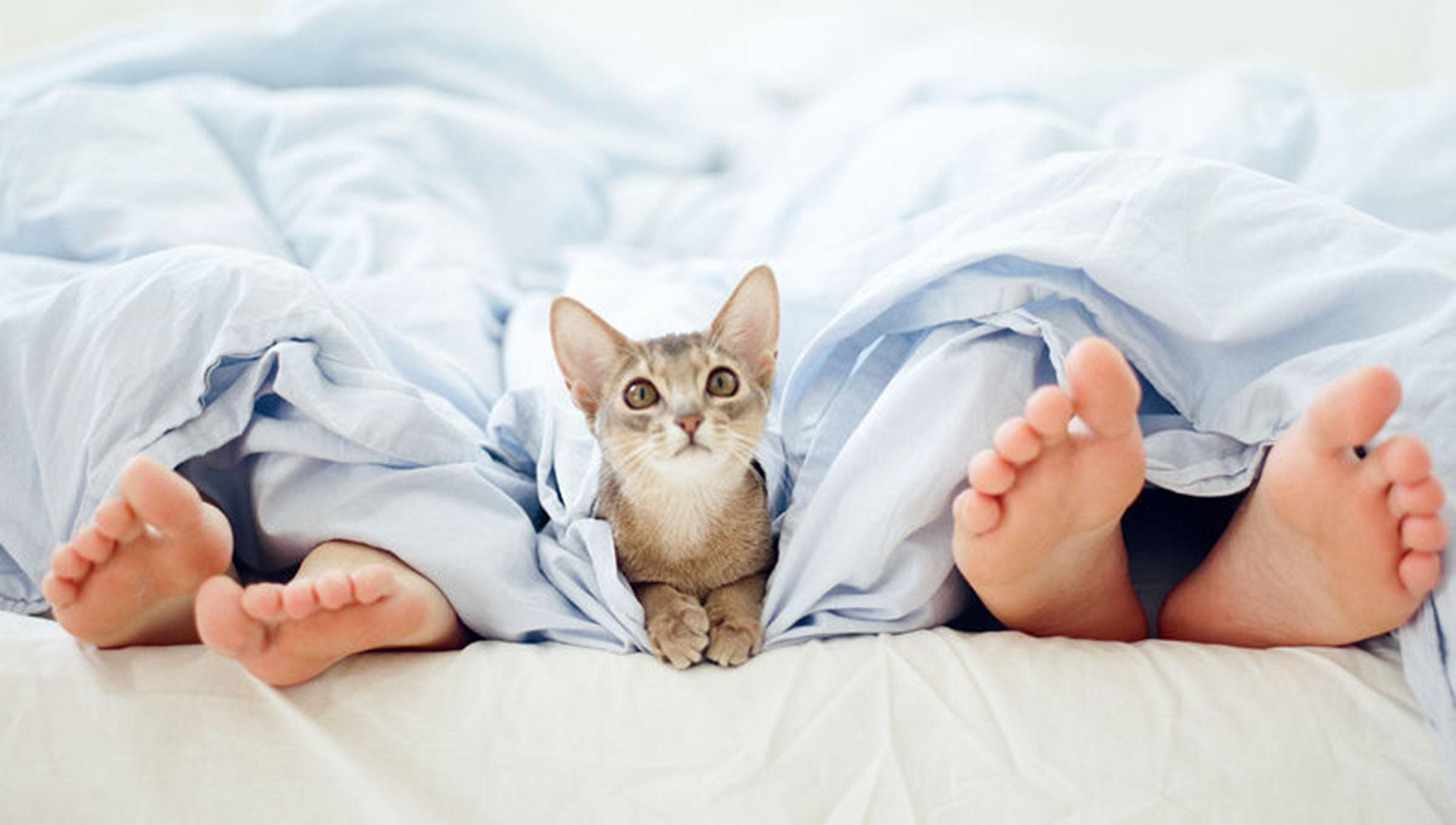 Cat peering from between two pairs of feet in bed
