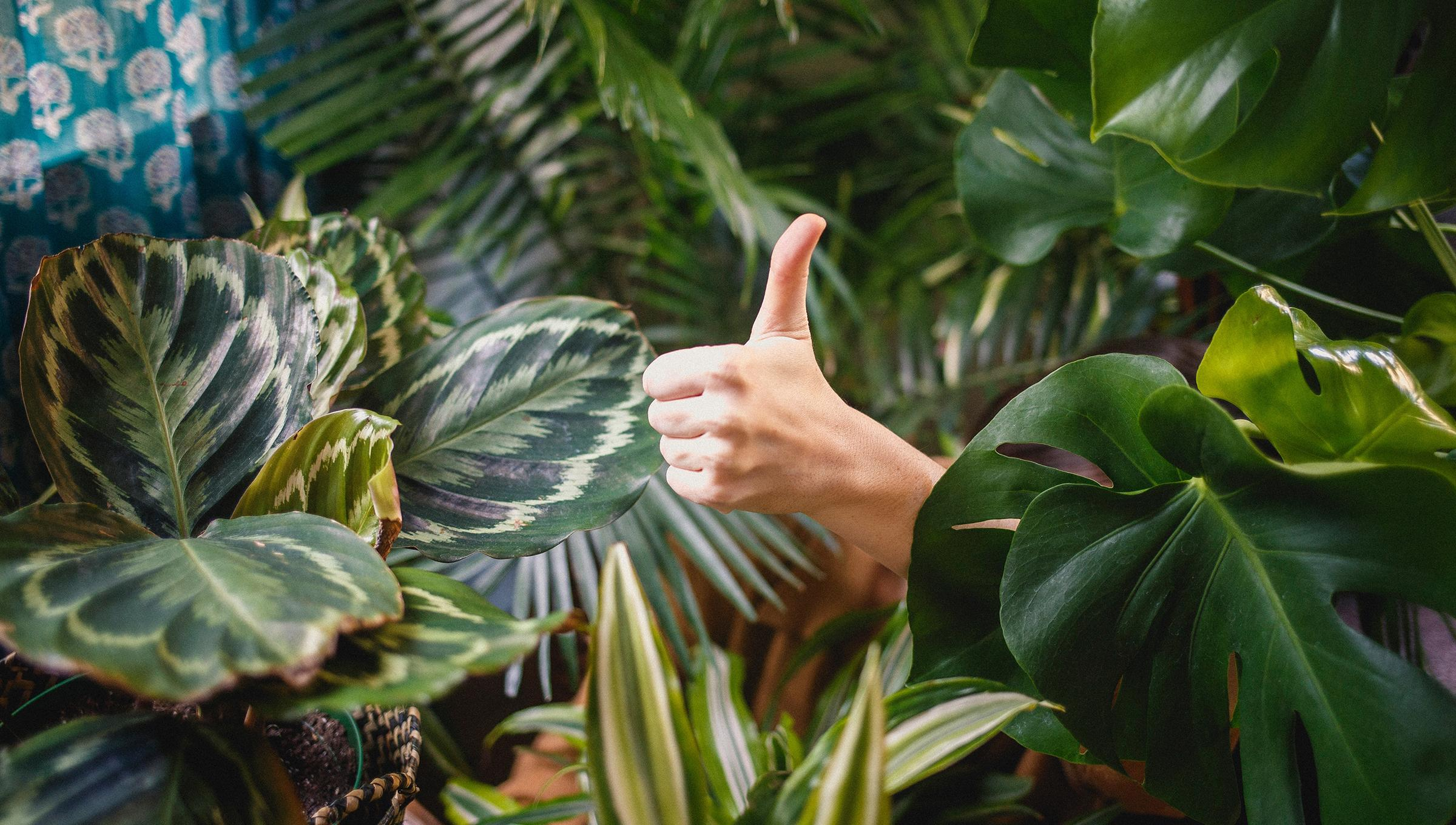 thumbs-up-plants