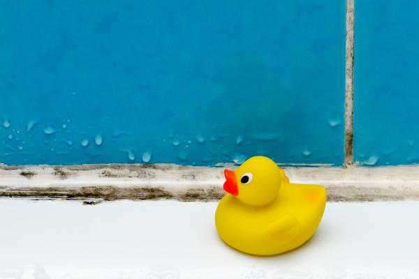 rubber ducky in a moldy shower