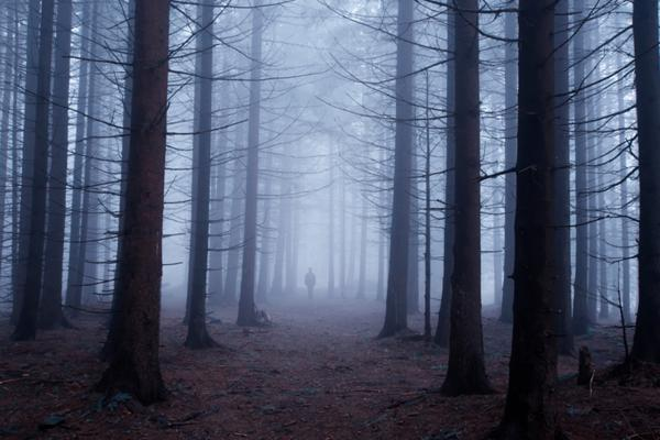 a man standing in a misty creepy forest