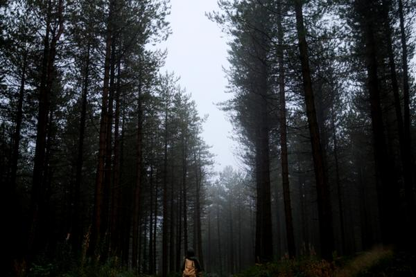 A person stands in a foggy pine forest.