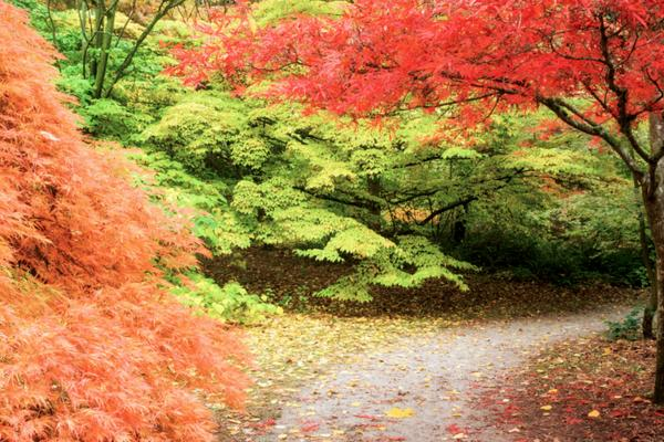 washington-park-arboretum-autumn