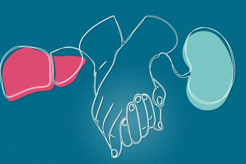 An illustration of hands, a liver and a kidney.