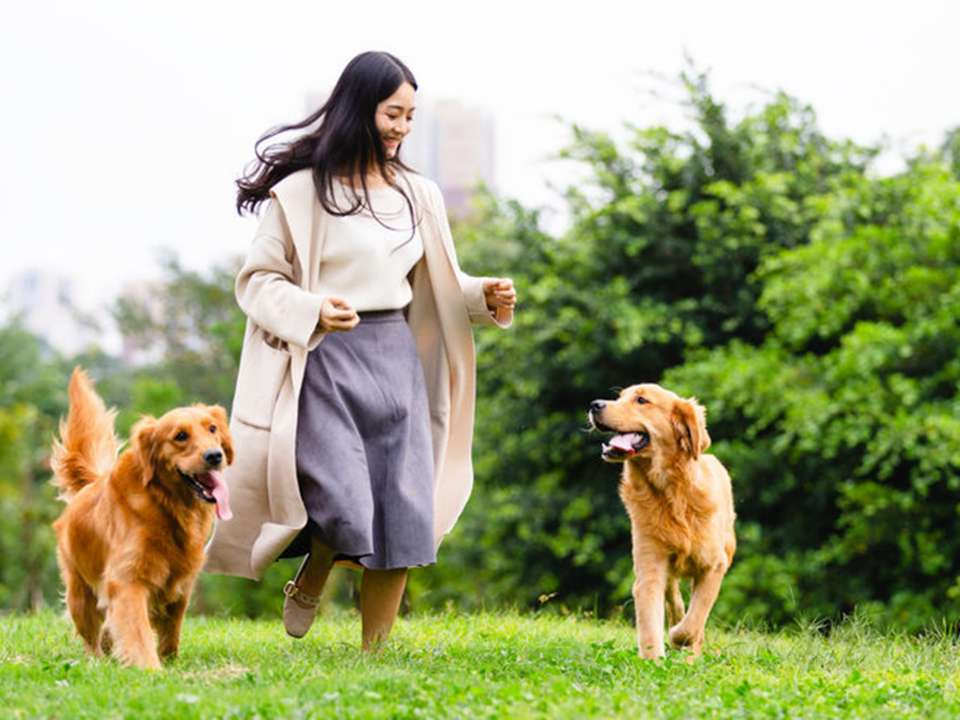 Young woman in park playing with two dogs